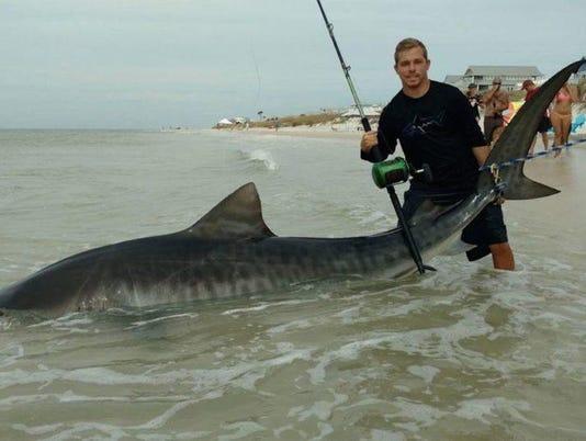 tiger-shark--970x546