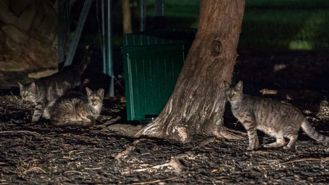 Palm Beach Island Cats cares for hundreds of cats, including these photographed in May 2018, on the island.