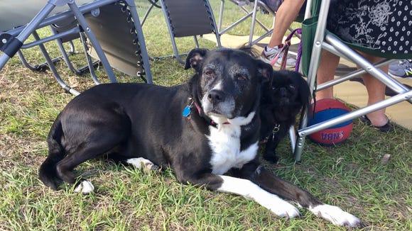 18 very good dogs of the Daytona 500