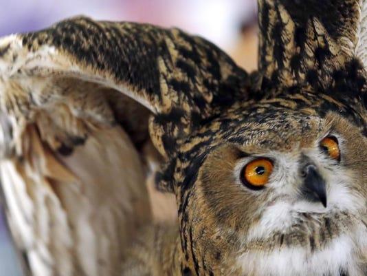 AP-US-ODD-Owl-Kills-.JPG