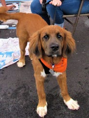 Wearing Tennessee orange, this friendly dog came to