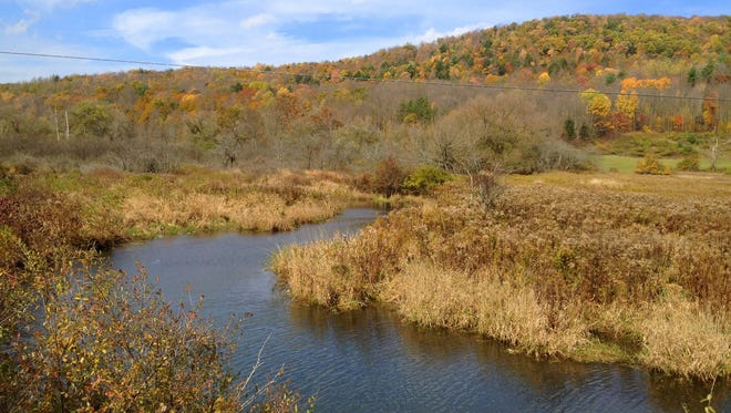 The West Branch of Owego Creek provides habitat for juvenile eastern brook trout.