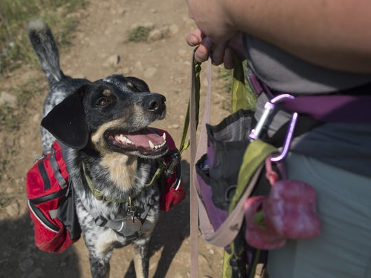 Hiking with dogs: What you should know