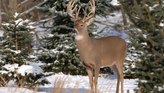 The N.C. Wildlife Resources Commission is proposing to change rules for deer hunting in Western North Carolina, including seasons for gun hunting.
