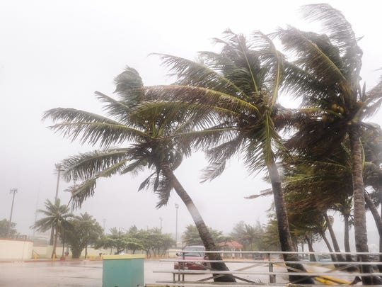 Trees bend and sway during the approach of Typhoon Dolphin on May 15. With a storm approaching, residents should ensure they're prepared.