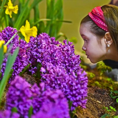 Ella Ferrone, 7 of Fairfax, enjoys the fragrance at the 2015 Vermont Flower Show at the Champlain Valley Expo in Essex Junction on Friday, the first day of the weekend-long exhibition.