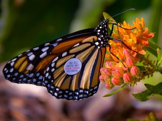 GCYbutterflies-1.jpg