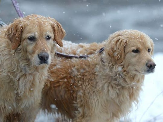 Hannah and Izzy during a morning snow fall earlier
