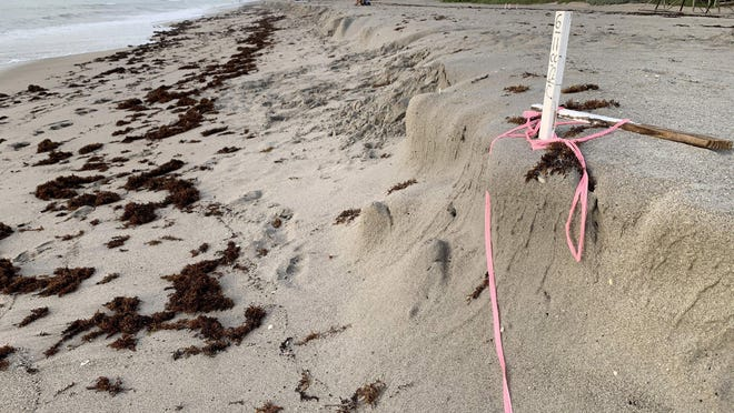 A stake stands Monday on Midtown Beach, marking where a sea turtle nest was apparently washed away Sunday by Tropical Storm Isaias.