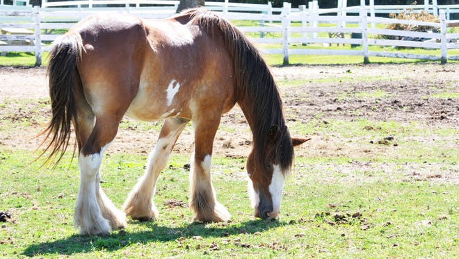 Horse owners have a responsibility to make sure manure is properly handled, and Ventura County agencies can provide guidance.