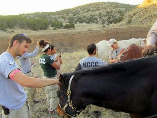 Some of the CCC members have never been one on one with a horse before this assignment.