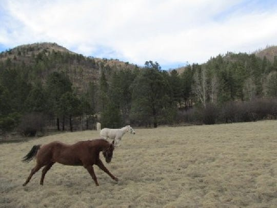 Letting his four-legged buddies run free for a while during a break in a ride.