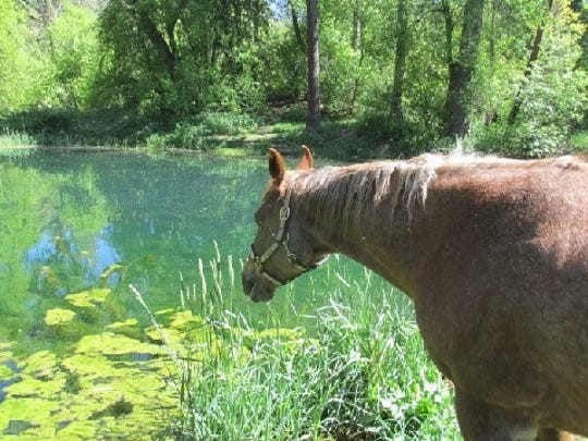Horses and their riders stopped to enjoy the blue water of a pond in the Lincoln National Forest.