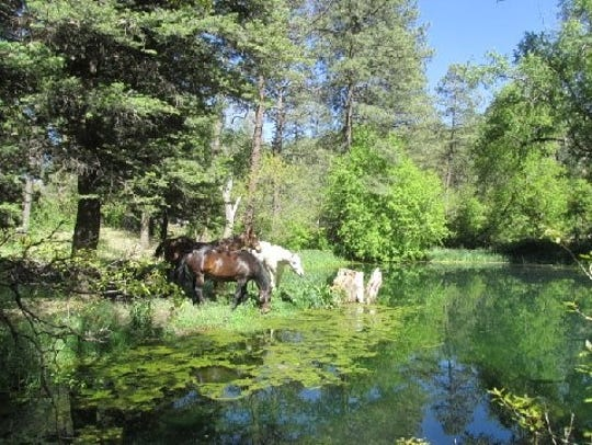 Three equines hanging out at the watering hole.