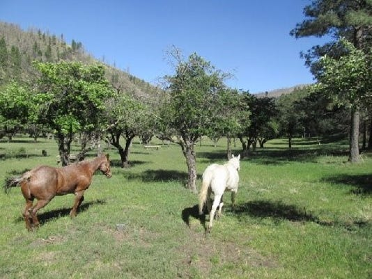 horses head to the orchard
