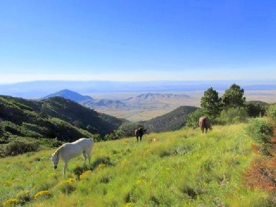 The horses graze in the mountains.