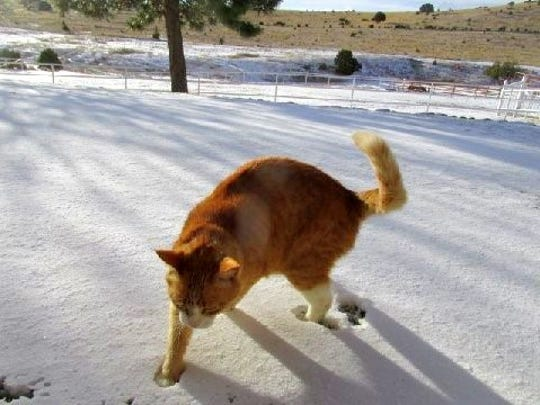Matthew Midgett's cat Wilcox encounters snow for the