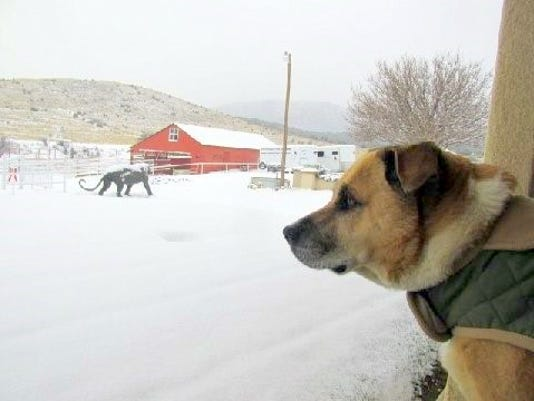 lulu watches the snow fall