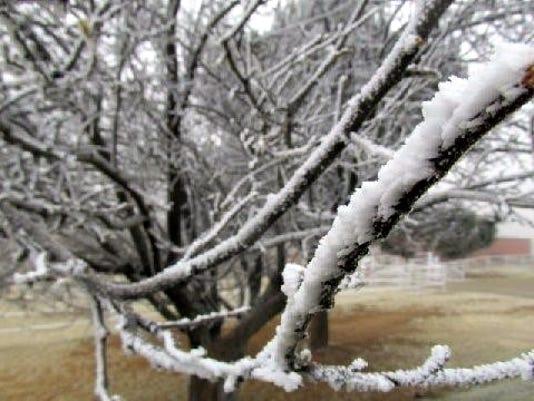 tree-limb