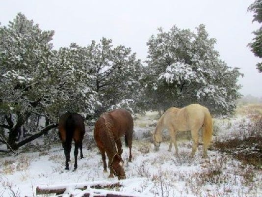 three horses in snow