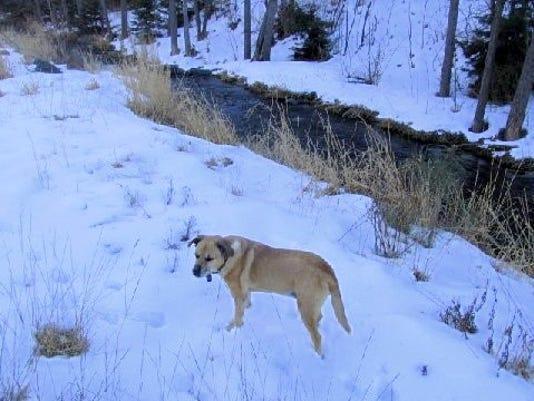 lulu in snow