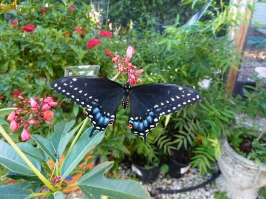 April 22 is Native, Butterfly and Edible Plant Sale day at Rotary Park.