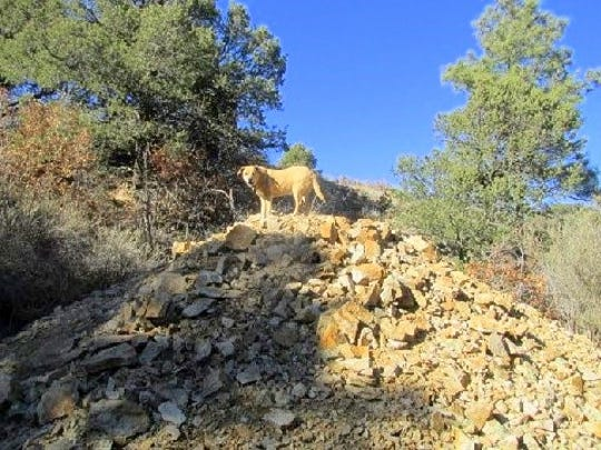 Lulu stands atop a tailings pile from one of many old mines.