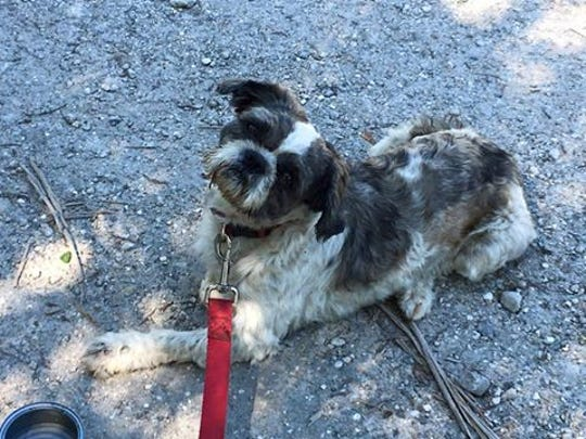 DO YOU KNOW ME?  I was found at Platt and Immokalee Road.