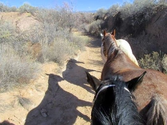 As the day wanes, the horses cast shadows.