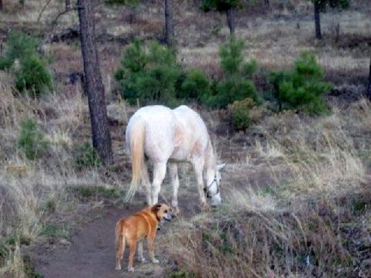 Thunder the horse and Lulu on the trail before they were joined by two elk.