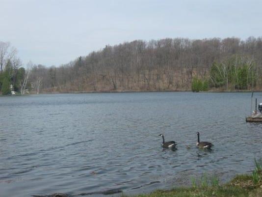636270825417063515-geese1.jpg