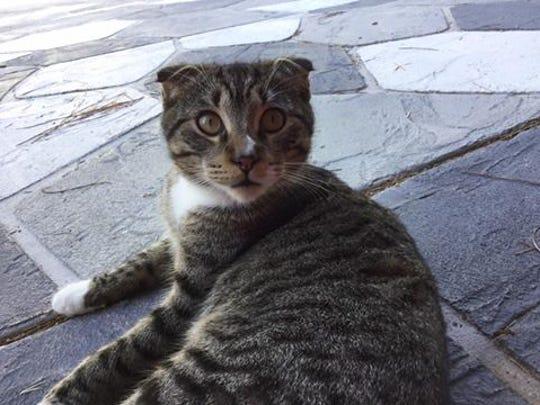 Scratch is missing from 7th Avenue SW and Collier Boulevard.