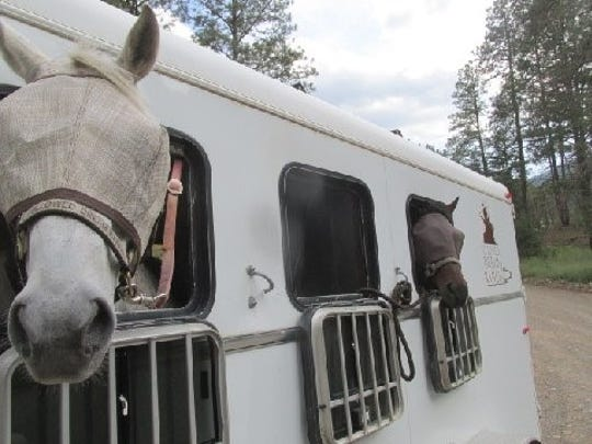 Both wearing fly masks, Thunder was in the front of the trailer and Vegas was in the back.