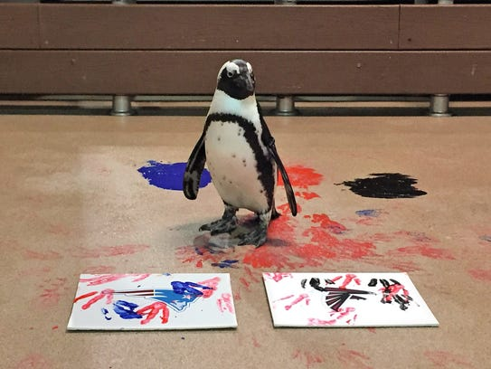 Check out opportunities from penguin encounters to