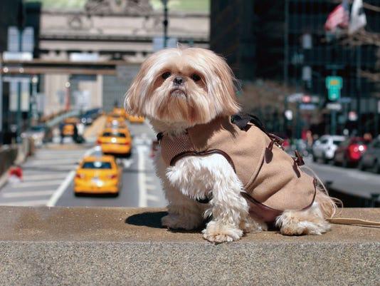 Pets Fashion (6)