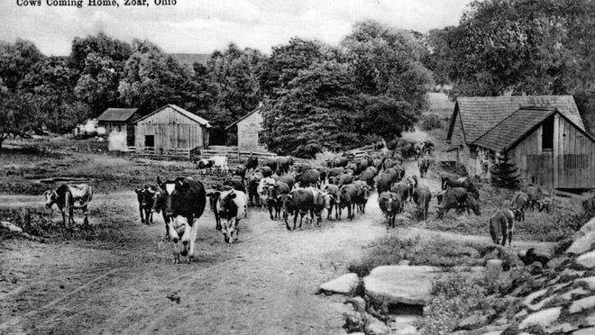 "This is an 1892 image of a herd of dairy cattle owned by the Society of Separatists of Zoar. The cows are walking through the village on Second Street. ""Cows coming home"" at Zoar indicates the high value placed on the dairy industry in the village."