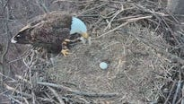 The Pennsylvania Game Commission posted an update on social media about the remaining egg in the Hanover eagle cam nest Monday morning.