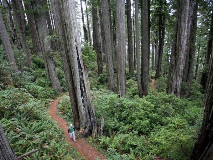 Ryan Freeman walks up Damnation Creek Trail at Del