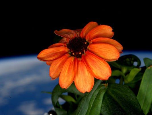 635888031069492039-Space-Flower-Arri.jpg