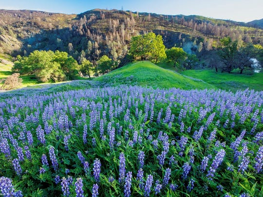 Wildflowers spread out across a hillside in Berryessa Snow Mountain National Monument.