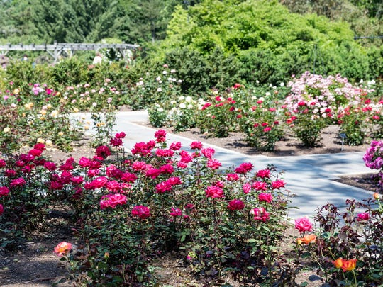 The Rudolf W. van der Goot Rose Garden, located in Colonial Park in Franklin Township, is also under the care of the Somerset County Parks Commission.