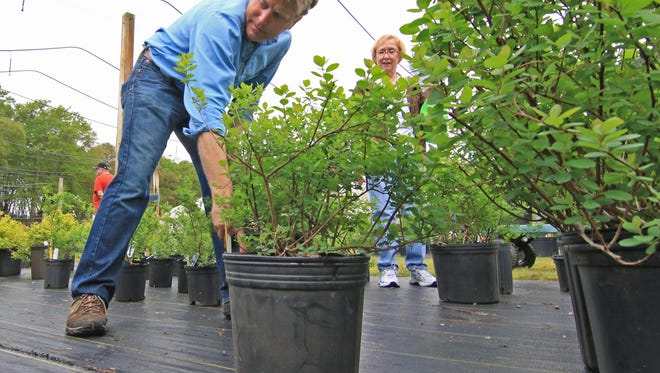 Patrick McMillan, South Carolina Botanical Garden director, helps Becky Owens of Anderson move plants for a  spring plant sale at The South Carolina Botanical Garden. The fall and spring sales are important fundraisers for the state garden, according to its managers.