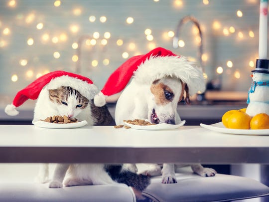Common holiday foods like chocolate, grapes, raisins, onions, garlic and macadamia nuts are toxic to pets.
