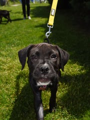 Liberty, a rescue dog of mixed breed, is pictured at