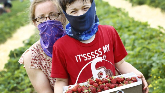 Mary Cunningham and her son Trajan, 6, of Norwell pick strawberries at Ward's Berry Farm in Sharon.
