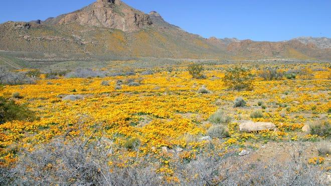U.S. Rep. Beto O'Rourke, D-El Paso, led the effort in Washington, D.C., to protect Castner Range. Poppies bloom every year on Castner Range in Northeast El Paso.