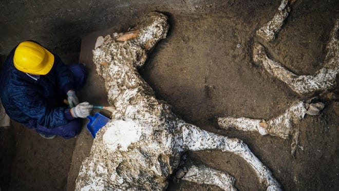 An archaeologist inspects the remains of a horse skeleton in the Pompeii archaeological site, Italy, Sunday.