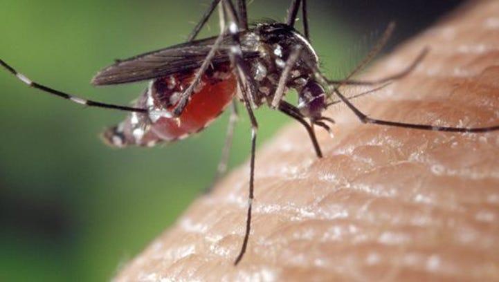 As mosquito season rises with the rains, public health