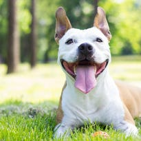 Your dog could be featured in the 2019 'West Allis Wags' calendar — and raise money for a future dog park