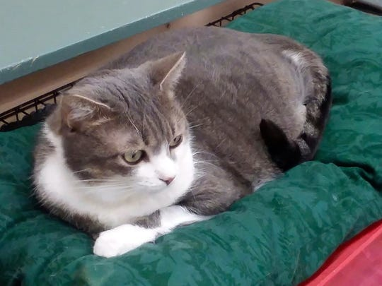 Snuggles is available for adoption at 10807 N. 96th